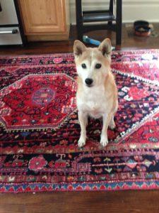 Yoko Ono, canis familris